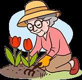 Grand-mère de 70 ans jardinage