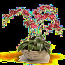 orchidee artificielle grand mere